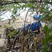 Marine debris at Pulau Ubin: Blue drums