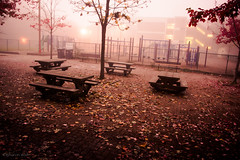 cries and whispers (bluechameleon) Tags: school autumn trees color colour leaves playground fog vancouver fence evening streetlights fallenleaves picnictables schoolyard bluechameleon sharonwish bluechameleonphotography