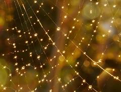 Hubo das de brillantes soles.......... (T.I.T.A.) Tags: macro drops spiderweb gotas tita teladearaa luzsol carmensolla carmensollafotografa carmensollaimgenes