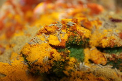 Burst of colours and spices (WorldClick) Tags: food green chicken canon asian eos restaurant foods photo yummy flickr photographer paste indian spice tasty powder worldwide spices photograph pakistani chilli grilled coriander cumin tarka tumeric lentils haldi daal kebabs jeera salan phototgraphy dhaniya karhai 1100d zeera gingergarlic canoneos1100d worldclick