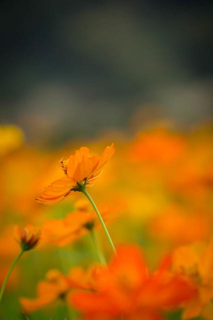 taiwanfood-06490.jpg