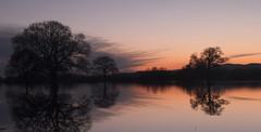 Trees in the Powick Hams floods (Stu thatcher) Tags: bridge sunset tree malvern floods worcester carrington hams powick