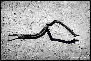 Sequía y sombras