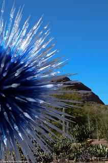 Dale_Chihuly_Desert_Botanical_Garden