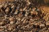 Gridlock! (Rainbirder) Tags: kenya maasaimara bluewildebeest connochaetestaurinus rainbirder