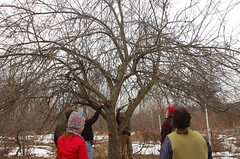 "Apple Pruning: A Group Effort <a style=""margin-left:10px; font-size:0.8em;"" href=""http://www.flickr.com/photos/91915217@N00/13528291243/"" target=""_blank"">@flickr</a>"
