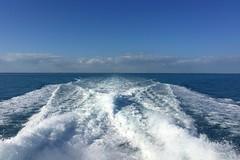 52. John Pennekamp glass bottom boat (Misty Garrick) Tags: johnpennekamp johnpennekampreef johnpennekampcoralreefstatepark coralreef florida keylargofl keylargo floridakeys atlanticocean