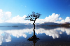 Loch Lomond (Del s) Tags: loch lomond milarrochy scotland blue water sky r tree hills 1200d