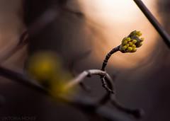 Backlight (Viktoria McKee) Tags: macrophotography macroshots macroshot makro makrofotografie macro macrodreams macromood macrounlimited bokeh flowers flower flora floral naturephotography natureshots nature natureshot natural light backlight