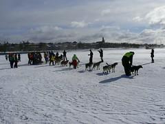 Amundsen race 2011 (jondewi52) Tags: animal cold dog dogs frozen amundsen midscandinavian mid scandinvian ice jämtland östersund landscape nature musher mushers outdoor outdoors people river race snow sky sleddog sleddogs winter