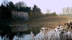 Réserve ornithologique (Raymonde Contensous) Tags: parcdeschantereines lestilliers réserveornithologique etangs eau lac villeneuvelagarenne hautsdeseine reflets nature paysage