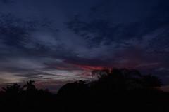 Red palms (Dreaming of the Sea) Tags: nikon d7200 dusk tamronsp2470mmf28divcusd tamron2470mm clouds bundaberg bluesky red redsunset palmtrees australia february 2017 500v20f 1000v40f