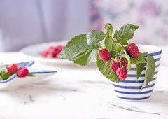 Fresh branch of raspberries in blue white stripped mug on table (♥Oxygen♥) Tags: berry cup food fresh healthy mug organic raspberry red rustic summer sweet wooden antioxidant bowl canned dessert domestic enamel enamelled farm farmland fruit garden gather grow harvest harvested blue home homemade kitchen marmalade orchard outdoors preservation scatter season seasonal spill summertime table white background green metal mint branch strip marine