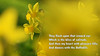 Spring Messenger (pallab seth) Tags: williamwordsworth macro dof spring flower barking park england london signofspring bokeh nature daffodil garden springgarden barkingpark yellow blue 2017 samsung60mmf28macroedoisssalens samsungnx1
