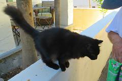Key West (Florida) Trip 2016 2065Ri 4x6 (edgarandron - Busy!) Tags: florida keys floridakeys keywest cat cats kitty kitties feline