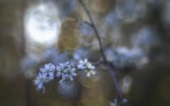 Happy Weekend! (ursulamller900) Tags: diaplan28100 spring frühling bokeh white