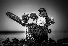 Dreamy_Flower_Monochrome (1 of 1) (Ashique Ridwan) Tags: flowers canon canon700d kitlens asian amateur dramatic bangladesh monochromatic bestshot bw
