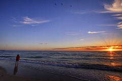 the sky is full of dreams (Bec .) Tags: theskyisfullofdreams bec canon micah 80d 1022mm henleybeach adelaide southaustralia beach ocean sea water shore light sun sunset beautiful beauty love seagulls inflight lookingup sand reflection