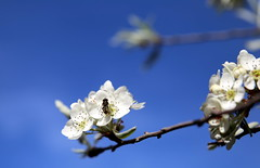 Lente in de Leuvense Kruidtuin (Kristel Van Loock) Tags: leuven louvain lovanio lovaina hortusbotanicuslovaniensis kruidtuin kruidtuinleuven leuvensekruidtuin botanicalgarden botanischetuin botanischergarten jardinbotanique jardinbotaniquedelouvain jardinbotanico jardimbotanico lente spring springseason blossoms blossom bloesem vlaanderen vlaamsbrabant primavera printemps springisintheair lenteindeleuvensekruidtuin verzonkentuin deverzonkentuin visitflanders visitbelgium visitleuven seemyleuven atleuven loveleuven leveninleuven visitvlaamsbrabant visitflemishbrabant flemishbrabant visitvlabrabant brabantefiammingo brabantflamand toerismevlaamsbrabant belgium belgique belgien belgië belgica belgio lentebloesem drieduizend