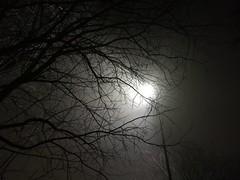 Nella nebbia #nebbia#sera#alberilugubri#lampione#paura#brivido#oscurità#fog#niebla#night#noche#arboles#alberi#trees#mournfultrees#arboleslugrubes#streetlamp#farola#miedo#fear#trill#emocion#oscuridad#darkness