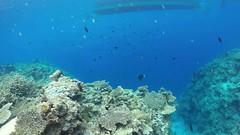 Free Diver (amsanpedro) Tags: elnido palawan philippines gopro freediver deep blue amsanpedro