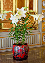 Easter Lillies in red pot. (WilliamND4) Tags: easter lilies flowers pot nikond810 nikon