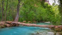 Bridge to Paraside (BX's Photos) Tags: river coloradoriver bluewater bridge laderbridge jungle havasu havasupai waterfalls havasucreek turquoise springtime havasucanyon redrockcanyon