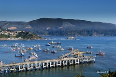 A LITTLE BIT OF CHILE........ (GABITA1999. Thanks for your visit.....) Tags: oceanopacifico parquedelota chile regiondelbiobio lota new