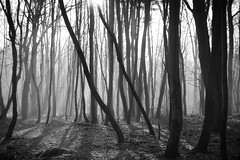 *** (pszcz9) Tags: polska poland przyroda nature natura las forest forestimages mgła fog mist drzewo tree poranek morning grudzień december pejzaż landscape beautifulearth światło light cień shadow bw blackandwhite monochrome sony a77