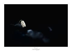 La dernière cigarette du condamné (Naska Photographie) Tags: naska photographie photo photographe paysage proxy proxyphoto macro macrophotographie macrophoto fleur flower floral anémone sylvie sauvage bois forest foret forêt forestier fleuri printemps monochrome minimaliste fumée color collembole bokeh ambiance univers
