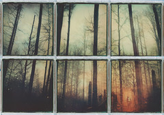 Hidden... (iam.ina) Tags: theimpossibleproject tree trees testfilm treeporn mountains wilderness muir polapals polaroidpals polaroid polaroidweek roidweek inaechternach wanderlust ilab bayerischerwald nationalpark