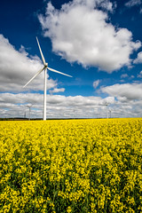 Swaffham Windmills & Rapeseed Field (Neal_T) Tags: 12mm clouds energy fuji fujifilm norfolk samyang sky spring watton wideangle windpower windturbine windmill xt10 farming field power rapeseed renewable renewableenergy swaffham turbine yellow norwich uk