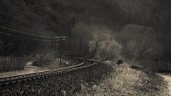 Valley of the Ahr (Netsrak) Tags: ahr ahrtal valleyoftheahr tree trees baum bäume gleis railway path way weg light licht forest wald