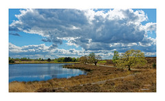 MAASDUINEN - Pikmeeuwen Water (Babaou) Tags: niederlande nederland limburg limburgnoord limburgslandschap nationaalparkdemaasduinen maas maasduinen dxo 1022mm canoneos