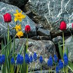 Spring in Seattle thumbnail