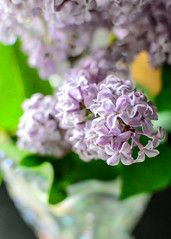 Lilacs (in EXPLORE 4/26/17) (bettyinparis) Tags: lilacs spring purple nature scent focus lilac narrowfocus color vase serenemood