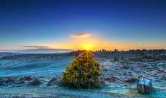 Frosty Rockford Sunrise (nicklucas2) Tags: rockfordcommon newforest gorse sun sunrise frost landscape