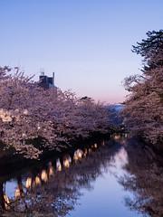 twilight reflection (gemapozo) Tags: sakura hirosakicity hirosakipark cherry fosse blossom aomori 645z twilight japan pentax 弘前市 青森県 日本 hdpentaxdfa645macro90mmf28edawsr さくら 桜 弘前公園 ソメイヨシノ