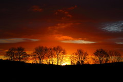 Sky Fire (alan.irons) Tags: silhouette sunrise cloudsstormssunsetssunrises canon clouds sun sky fire trees landscape light strathmore valley scotland ecosse angus intense