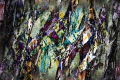 Combinación XL (seguicollar) Tags: imagencreativa photomanipulación art arte artecreativo artedigital virginiaseguí montajefotográfico fotomontaje color colorido brillante corteza texturas