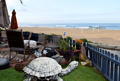 turtle (greenelent) Tags: turtle beach ocean manhattanbeach ca california 365 photoaday