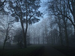 (RosieBartolozzi) Tags: cardiff butepark fog mist foggy morning dawn trees cardiffpark citypark wales southwales blue light shadow silhouette winter wintermorning winterweather nature natural path