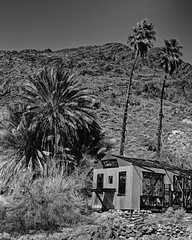 Ibex Spring Mining Camp (Mike Schaffner) Tags: abandoned bw blackwhite blackandwhite camp deathvalley deathvalleynationalpark decay decayed derelict deserted dilapidated dvnp ibexspring ibexsprings mine mining monochrome nationalpark old palm park talc trees california unitedstates us