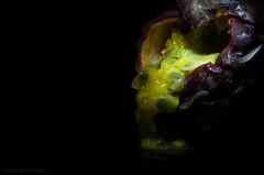 heart of passion (sure2talk) Tags: heartofpassion passionfruit macromondays seeds onblack lightpainted macro closeup nikond7000 nikkor85mmf35gafsedvrmicro
