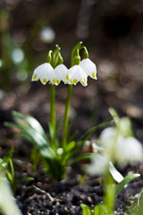 (Dinosaursinmysoup!) Tags: spring flowers signofspring