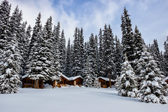 Shadows in the Forest (Kristin Repsher) Tags: alberta backcountry backcountrylodge banff banffnationalpark cabins canada canadianrockies df lodge nikon pinetrees rockies rockymountains shadowlakelodge snow snowshoeing winter