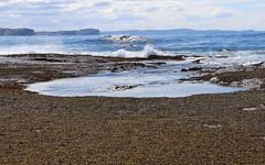 Long Reef, Sydney Australia (Poytr) Tags: longreef sydney ocean pacifichighway baldhillclaystone northernbeaches collaroy