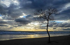 Tree growing on the beach (kutruvis nick) Tags: greece greek hellas attiki beach lagonisi bluecoast clouds sea water sky waves reflection sunset view seascape tree nik kutruvis nikon d5100