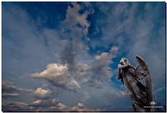 APRIL  2017-021151-222 (Nick and Karen Munroe) Tags: concrete concreteangel composite selectivecolour storm stormclouds landscape angels angel statue brampton ontario outdoors canada clouds colour colors color nikon nickandkarenmunroe nickmunroe nikond750 nikon1424f28 nickandkaren karenick23 karenick karenandnickmunroe karenmunroe karenandnick munroedesignsphotography munroedesigns munroephotography munroe