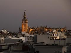 CATEDRAL DE SEVILLA (LUIS FELICIANO) Tags: sevilla catedral nocturna andalucia españa panoramica ciudad giralda torre anochecer exterior airelibre olympus e5 lent1260mm